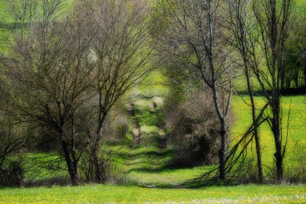 Auf dem Weg zur Jungviehweide in Villingen ©AW-Anja-Bronner