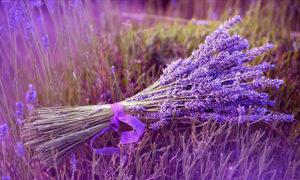 wallpaper.wiki-Lavender-Flower-Desktop-Wallpaper-PIC-WPE009477