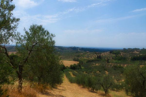 Olivenhain Toscana ©AW-Anja-Bronner